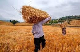 ۴ میلیون تن کمبود گندم در کشور وجود دارد