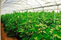 جهش در تولید محصولات کشاورزی با توسعه کشتهای گلخانهای امکان پذیر است