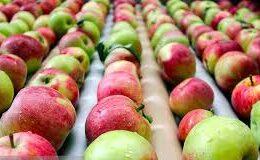 صادرات سیب از استان هموار شد
