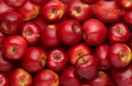 تامین۸۸۰۰ تن از سیب شب عید کشور توسط آذربایجانغربی