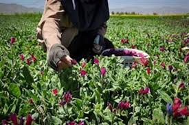 زمینه کشت ۱۰۰ هکتار از گیاهان دارویی کم آب بر فراهم می شود