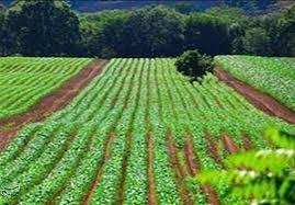تولید بیش از ۴میلیون تن محصولات زراعی در آذربایجان غربی