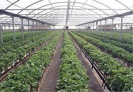مشکلات کشاورزان و دامداران با توجه به کروناویروس در اولویت بررسی مجلس قرار دارد