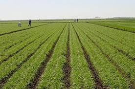 تقویت تشکلهای کشاورزی در آذربایجانغربی
