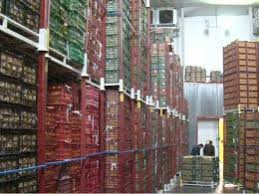 افزایش ۲ برابری سیب انبار شده در سردخانه های آذربایجان غربی