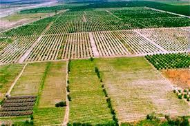 اجرای طرح کاداستر بهترین راه مبارزه با زمین خواری است