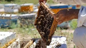 بیش از ۲۱ هزار تن عسل در آذربایجان غربی تولید شده است