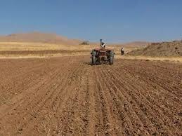 ۲۴۳ هکتار از اراضی استان زیر کشت غلات پائیزه رفته است