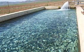 تولید ۱۶هزار تن انواع ماهیان سردابی و گرمابی در آذربایجانغربی