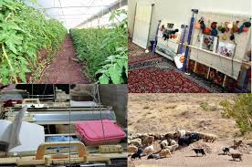 ۱۴۷ میلیارد تومان اعتبار برای اشتغال پایدار روستایی استان ابلاغ شد