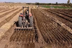 کشاورزان نسبت به کشت به موقع غلات در استان اقدام نمایند