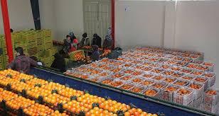 مصوبه افزایش تعرفه صادراتی محصول سیب درختی و پرتقال لغو شد