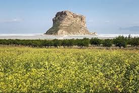 پیش خرید ۵۹۱ هزار تن گندم از گندمکاران استان