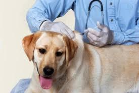 واکسینه ۱۷هزار قلاده سگ علیه بیماری هاری در آذربایجانغربی
