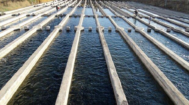کانون بیماریهای ویروسی در سطح مزارع پرورش ماهی استان کاهش یافته است