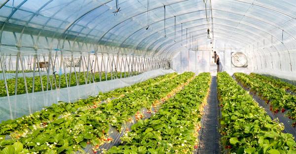 ثبت اطلاعات گلخانه ها جهت تخصیص سوخت مایع