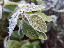 بکارگیری تدابیر لازم جهت کاهش خسارت احتمالی سرمازدگی در بخش کشاورزی