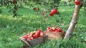 تولید بیش از ۱۸۰ هزار تن انواع محصولات باغی در شهرستان میاندوآب