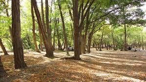 حضور در پارکها و تفرجگاههای آذربایجانغربی تا ۲۰ فروردین ماه ممنوع شد
