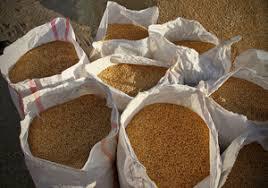 ۱۴ هزار تن بذر اصلاح شده برای سال زراعی جدید تامین شد