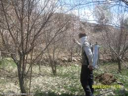 شرایط جوی استان آذربایجانغربی برای سمپاشی باغها و مزارع مساعد است