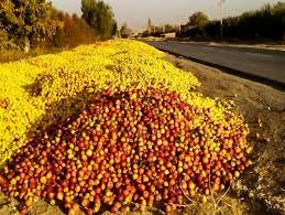 برپایی ۳۷ غرفه خرید سیب صنعتی در آذربایجانغربی