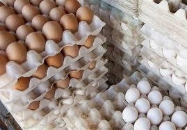 صادرات بیرویه تخممرغ عامل اصلی افزایش قیمت آن است