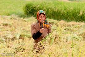 آموزش بیش از دو هزار نفر از زنان روستایی استان در طرح بهبود تغذیه